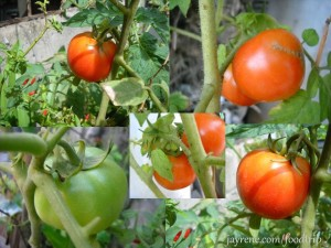 tomato, grow your own tomatoes